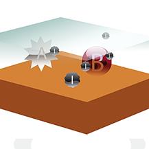 Les ions sont attirés par la bactérie